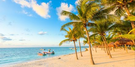 Car Rentals in Akumal from $5/day - Search for Rental Cars on KAYAK