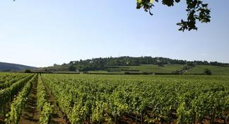 Small-Group Full-Day Tour of Côte de Nuits, Côte de Beaune Vineyards and Beaune Historical District
