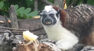 Panama City Sightseeing Tour Including Miraflores Locks