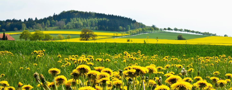 Schmallenberg - Ξενοδοχεία με σπα