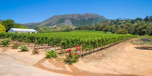Car Hire in Stellenbosch