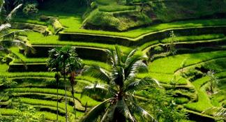 Bali: Scenic Ubud and Kintamani Volcano Full-Day Tour