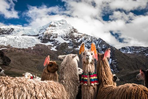 Ưu đãi cho khách sạn ở Cusco