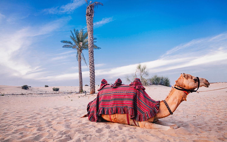Arab dating Lontoo Raamatun dating naimisissa oleva mies