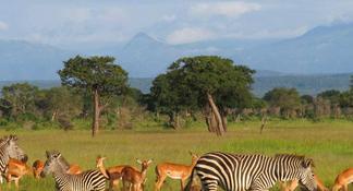 6-Day Fascinating Southern Tanzania Safari