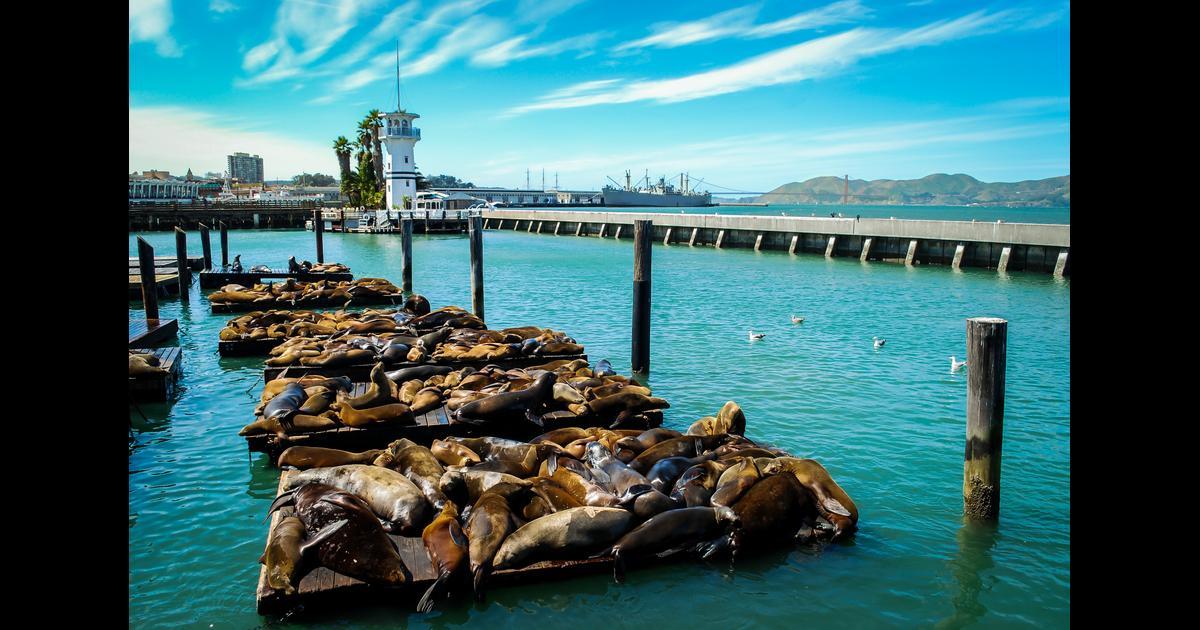 Hotels Near Fisherman S Wharf San Francisco Amazing Deals