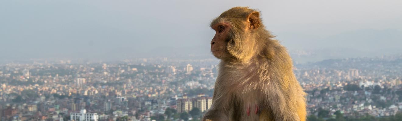 Kathmandu hotellia