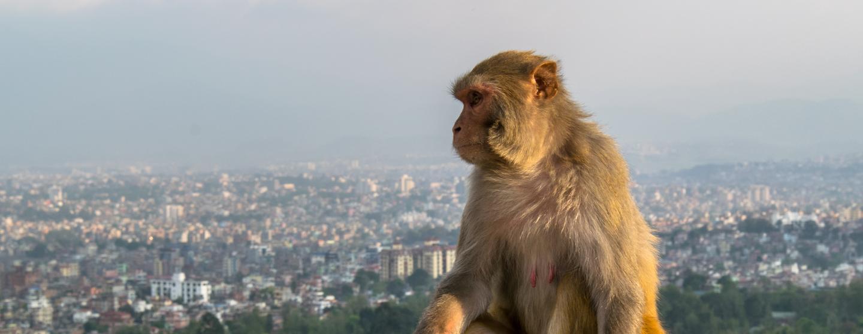 Κατμαντού - Ξενοδοχεία με σπα