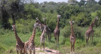 Lake Manyara Guided Day Tour from Arusha
