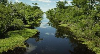 Découvrez le pays Cajun: visite d'une journée complète avec aventure en bateau dans les marais et visite des plantations au départ de la Nouvelle-Orléans