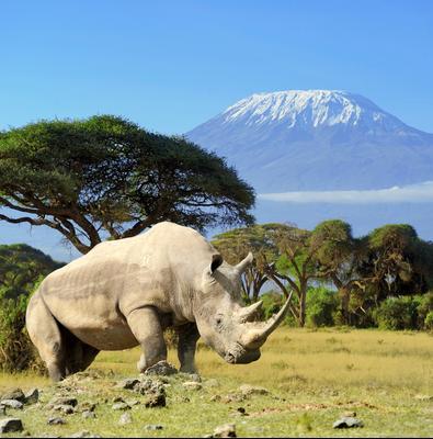 Amboseli hoteles