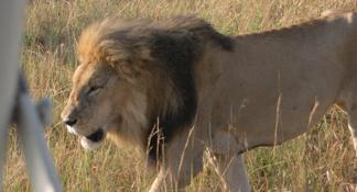 Day Tour: Giraffe Center, Elephant Orphanage and Nairobi National Park