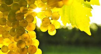 Marlborough Half-Day Wine Tour from Blenheim