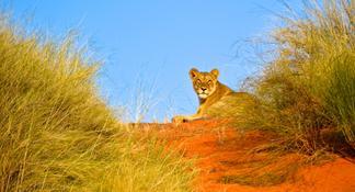 Hluhluwe Game Reserve Safari
