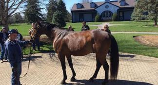 Thoroughbred Horse Farm Tour in Kentucky
