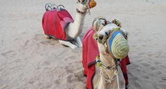 Dubai Desert 4x4 Dune Bashing, Sandboarding, Camel Riding, Dinner