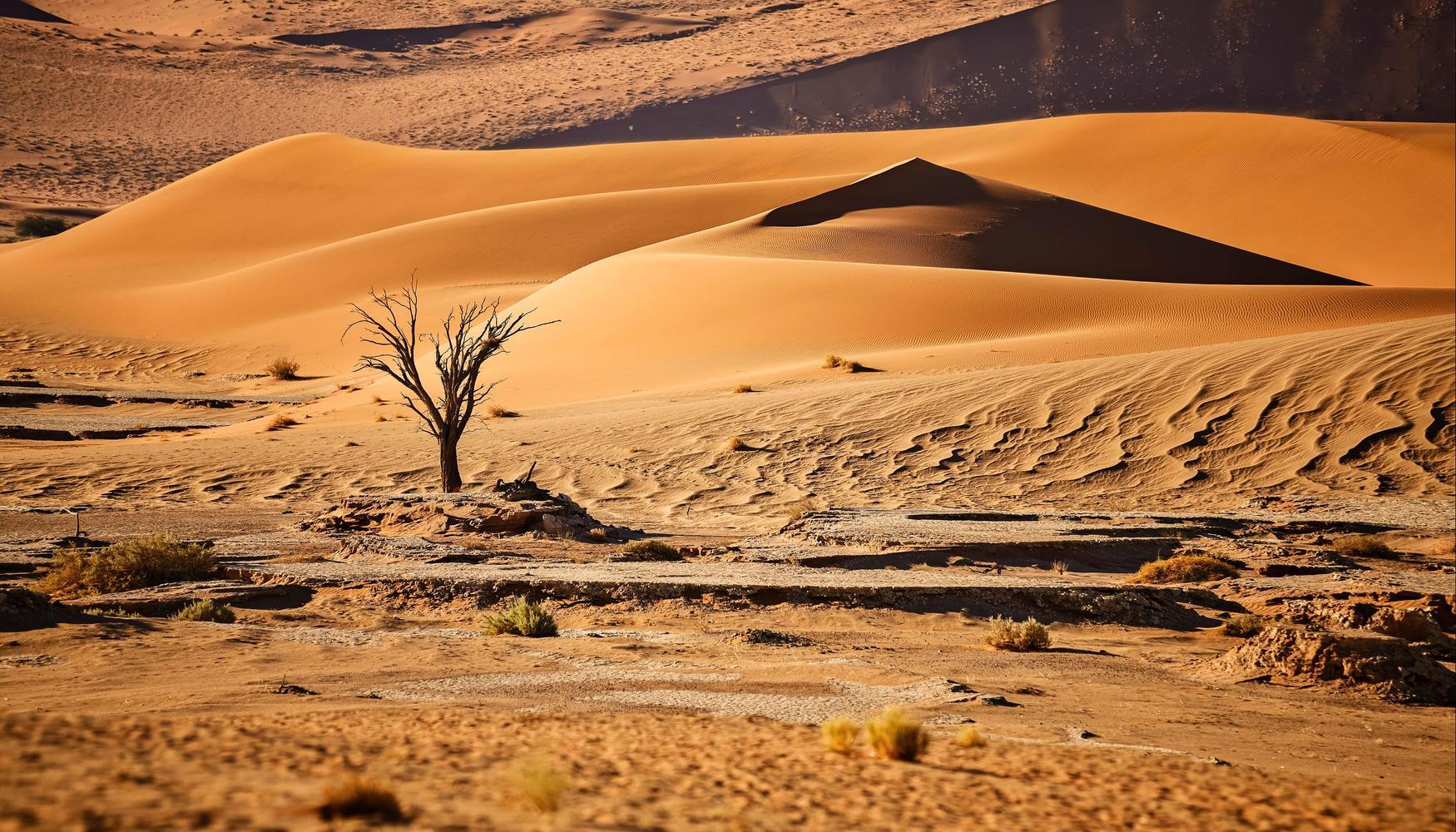 Biludlejning i Namibia