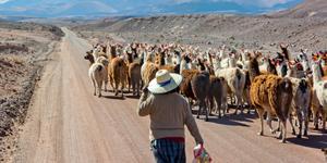 Location de voiture à San Pedro de Atacama
