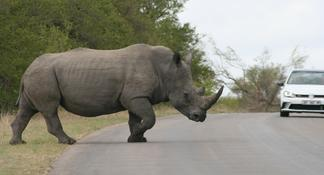 Kruger Park Safari with Overnight Lodge Accommodation