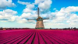 Netherlands car rentals