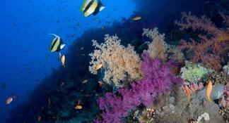 Introductory Dive in Eilat