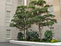 華盛頓飯店