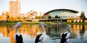 Autonoleggi a Adelaide