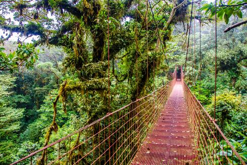 Deals for Hotels in Monteverde