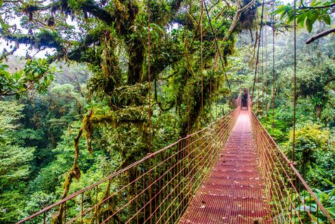 Deals for Hotels in Monteverde