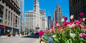 Car Hire in Chicago