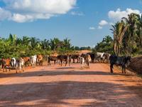 Rondônia hotels