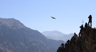 Colca Valley Overnight from Arequipa: Colca Canyon, Vicuna Reserve and Condors