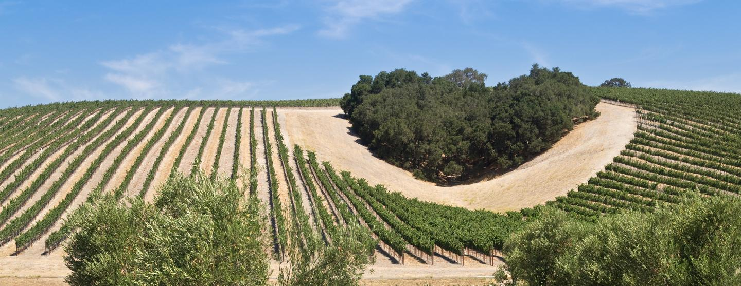 Paso Robles budget hotels