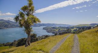 Half-Day Iconic Dunedin City Tour