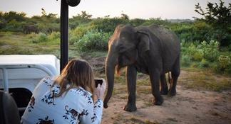 Yala National Park Private Safari trip from Galle/Unawatuna/Mirissa