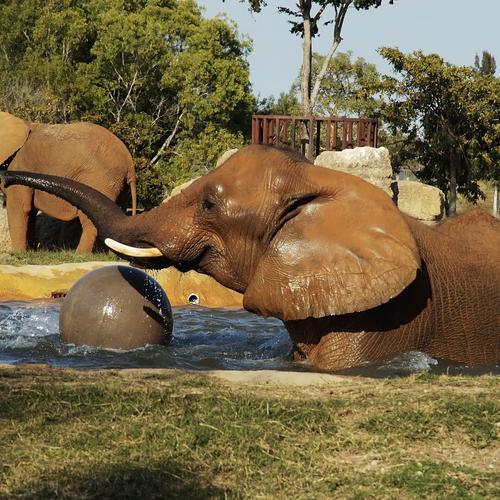 Zoo di Miami