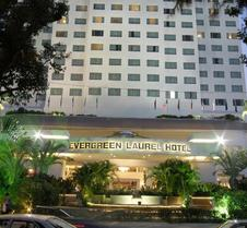 Evergreen Laurel Penang