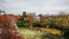 Arboretum view- Evergreen - Seattle - Outdoors view