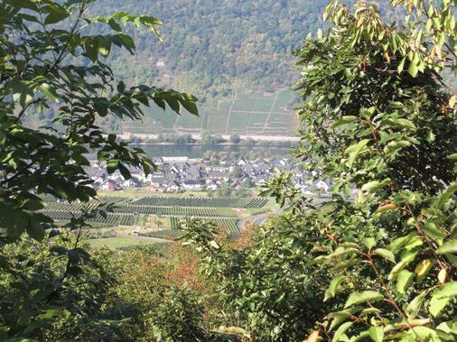Pension Dören - Cochem - Outdoor view