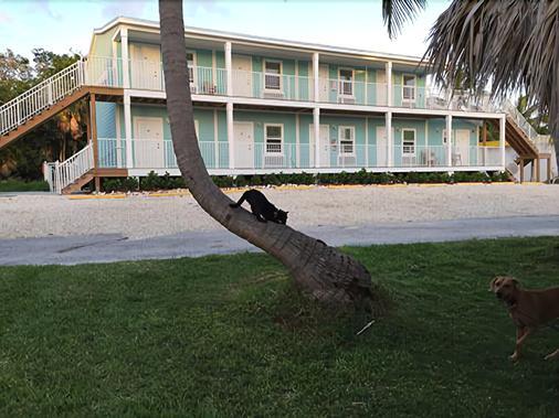 Bonefish Bay Motel - Marathon - Κτίριο