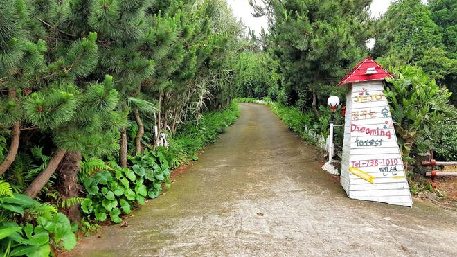 Dreaming Forest - Seogwipo - Outdoor view