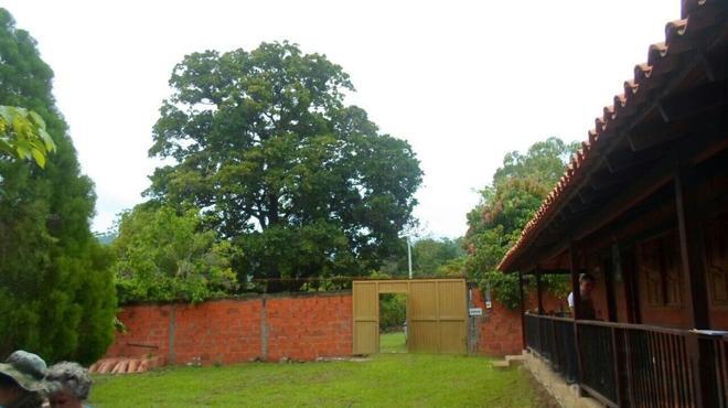 Dream Catcher - Palomino - Outdoors view