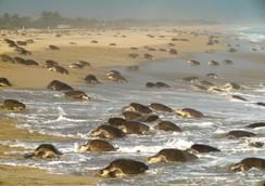 Best Western Posada Chahue - Santa Maria Huatulco - Παραλία