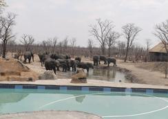 Dzibanana Lodge & Camping - Sepako - Pool