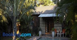 A Traveller's Palm - Phalaborwa