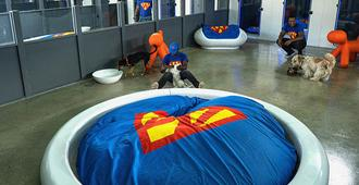 Superwoof Dog Hotel & Daycare - Cape Town - Property amenity