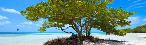 Albury Court Hotel - Key West - Beach