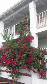Shalimar Motel - Miami - Varanda